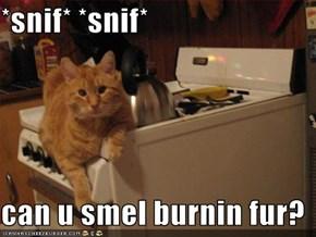 *snif* *snif*  can u smel burnin fur?