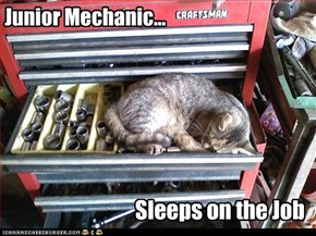 Junior Mechanic...