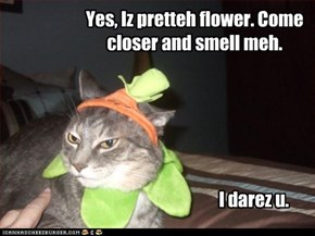 Yes, Iz pretteh flower. Come closer and smell meh.