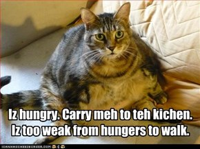 Iz hungry. Carry meh to teh kichen. Iz too weak from hungers to walk.