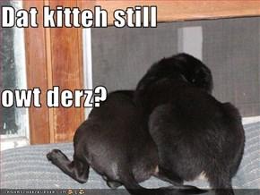Dat kitteh still owt derz?