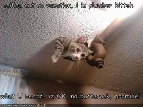 ceiling cat on vacation, i iz plumber kitteh   whut U needz? iz OK, no buttcrack, promise!