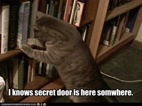 I knows secret door is here somwhere.