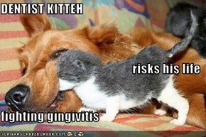 DENTIST KITTEH risks his life fighting gingivitis
