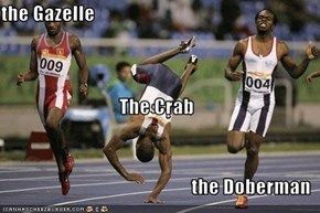 the Gazelle The Crab the Doberman