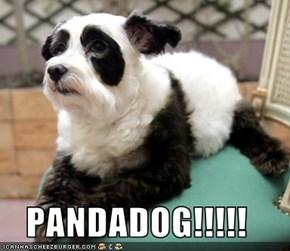 PANDADOG!!!!!
