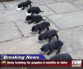 Breaking News - Army training for puppies 8 months or older