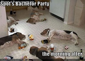 Spot's Bachelor Party  the morning after