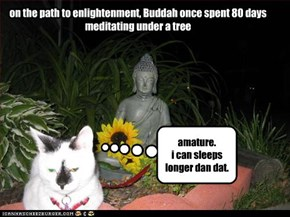 on the path to enlightenment, Buddah once spent 80 days meditating under a tree