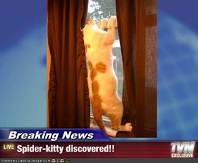 Breaking News - Spider-kitty discovered!!