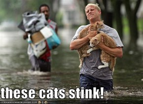 these cats stink!