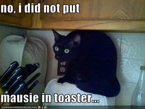 no, i did not put  mausie in toaster...