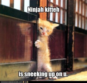 Ninjah kitteh