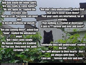 And God asked the feline spirit, Author Unknown