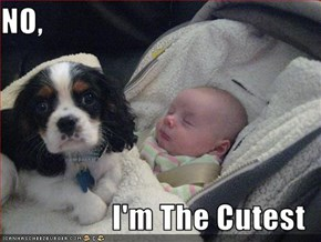 NO,  I'm The Cutest