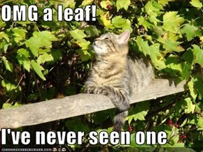 OMG a leaf!  I've never seen one