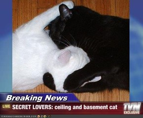 Breaking News - SECRET LOVERS: ceiling and basement cat