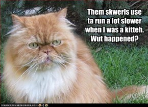 Them skwerls use ta run a lot slower when I was a kitteh. Wut happened?