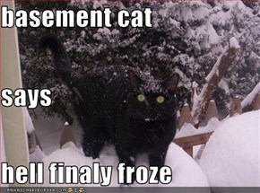 basement cat says hell finaly froze