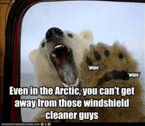 Even in the Arctic, you can't get away from those windshield cleaner guys