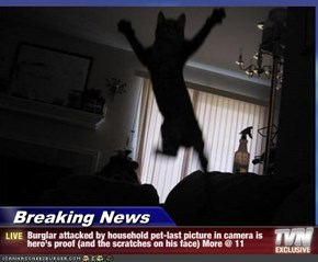 Breaking News - Burglar attacked by household pet-last picture in camera is hero's proof (and the scratches on his face) More @ 11