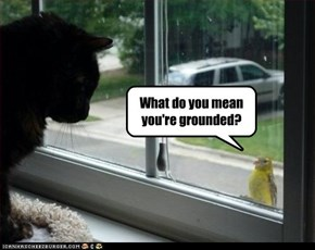 What do you mean you're grounded?