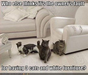 Who else thinks it's the owner's fault   for having 3 cats and white furniture?