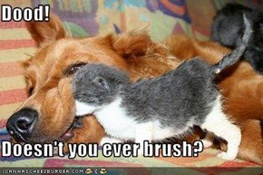 Dood!  Doesn't you ever brush?