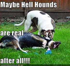 Maybe Hell Hounds are real after all!!!