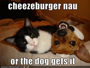 cheezeburger nau  or the dog gets it