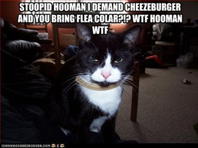 STOOPID HOOMAN I DEMAND CHEEZEBURGER AND YOU BRING FLEA COLAR?!? WTF HOOMAN WTF
