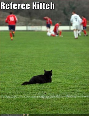 Referee Kitteh