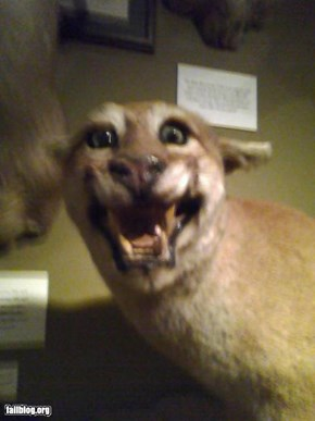 Taxidermy Win