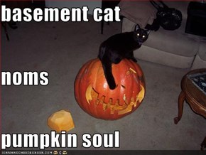basement cat noms pumpkin soul