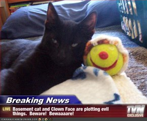 Breaking News - Basement cat and Clown Face are plotting evil things.  Beware!  Bewaaaare!