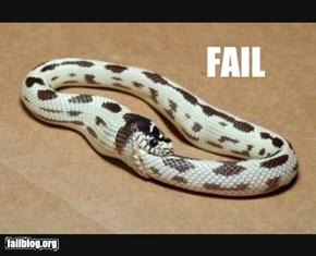 Snake Food Fail