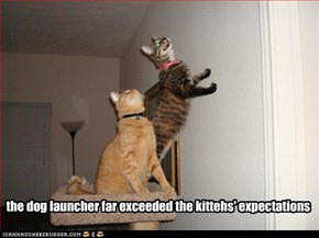 the dog launcher far exceeded the kittehs' expectations
