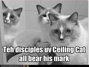 Teh disciples uv Ceiling Cat all bear his mark