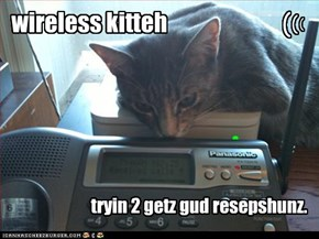 wireless kitteh
