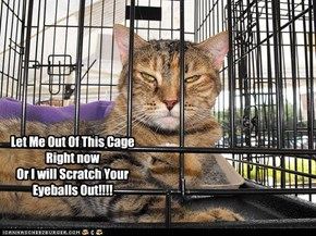 Let Me Out Of This Cage Right now  Or I will Scratch Your Eyeballs Out!!!!