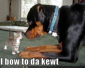 I bow to da kewt