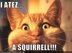 I ATEZ...  A SQUIRRELL!!!
