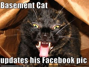 Basement Cat  updates his Facebook pic