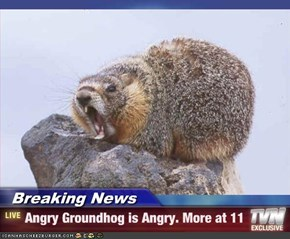Breaking News - Angry Groundhog is Angry. More at 11