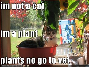 im not a cat im a plant plants no go to vet