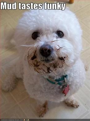 Mud tastes funky