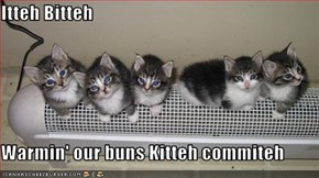 Itteh Bitteh  Warmin' our buns Kitteh commiteh