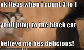 ok fleas when i count 3 to 1 youll jump to the black cat believe me hes delicious!