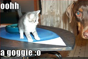 oohh  a goggie :o