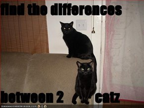 find the differences  between 2           catz
